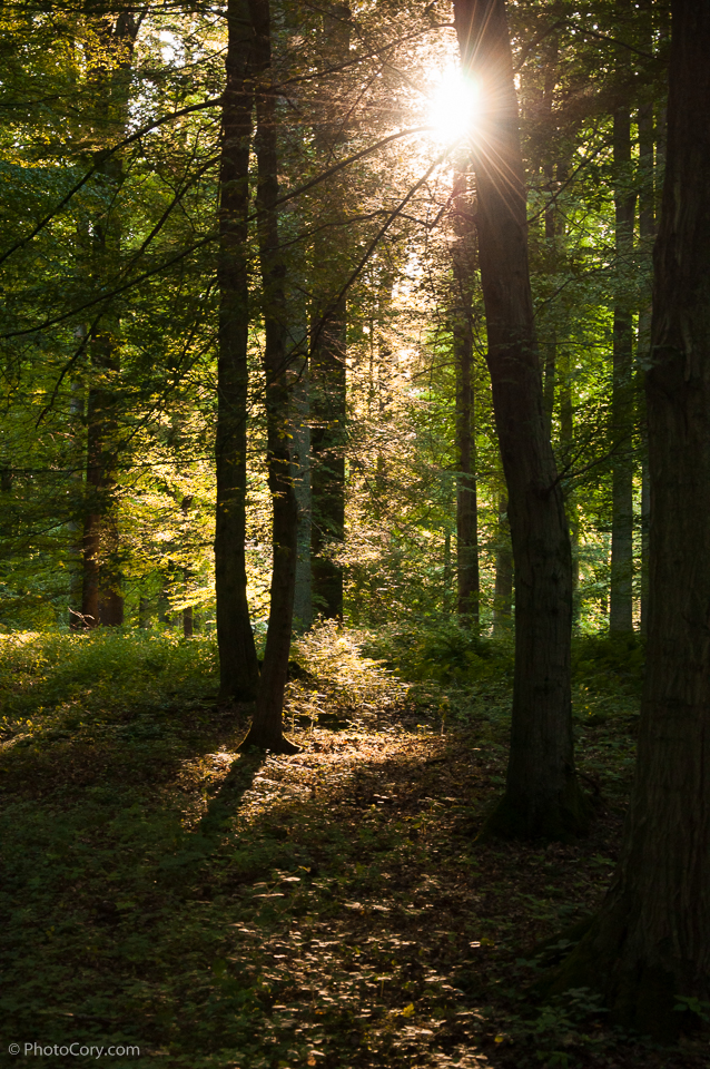 sun rays trees forest soignes