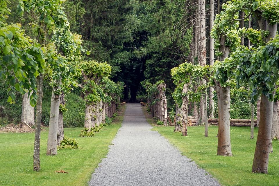 trees chateau jehay belgium