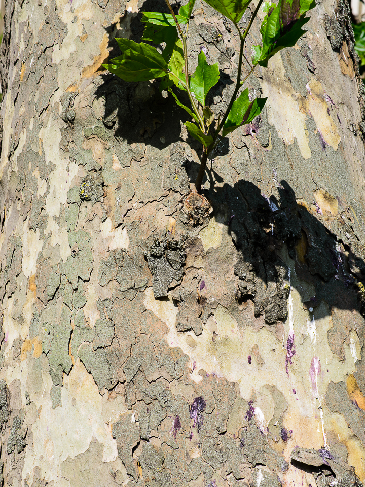bark of a tree with pink bird poop