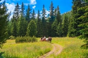 Slovakia, High Tatras, horse and carriage, summer