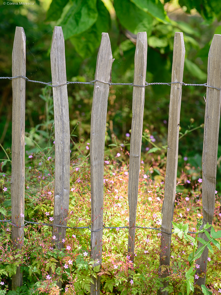 wooden fence blurred background