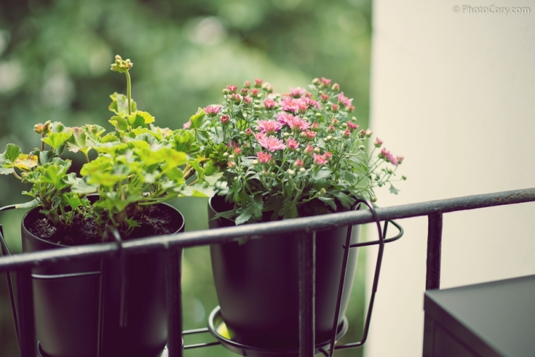 colored flowers in pots on the balcony
