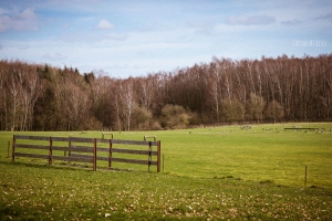 field with wooden fence