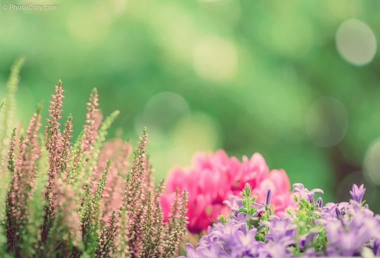 flowers romantic faded