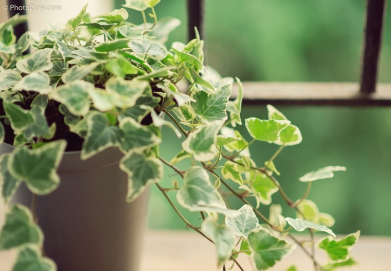 green plants in balcony