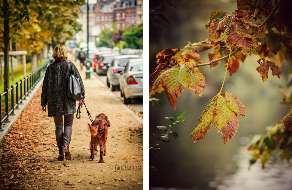 autumn leaves dog walking