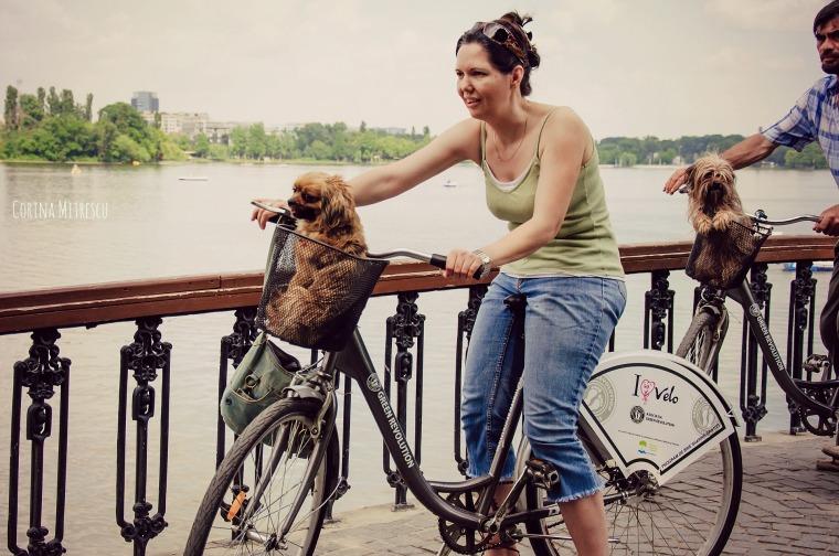 dog on bike basket