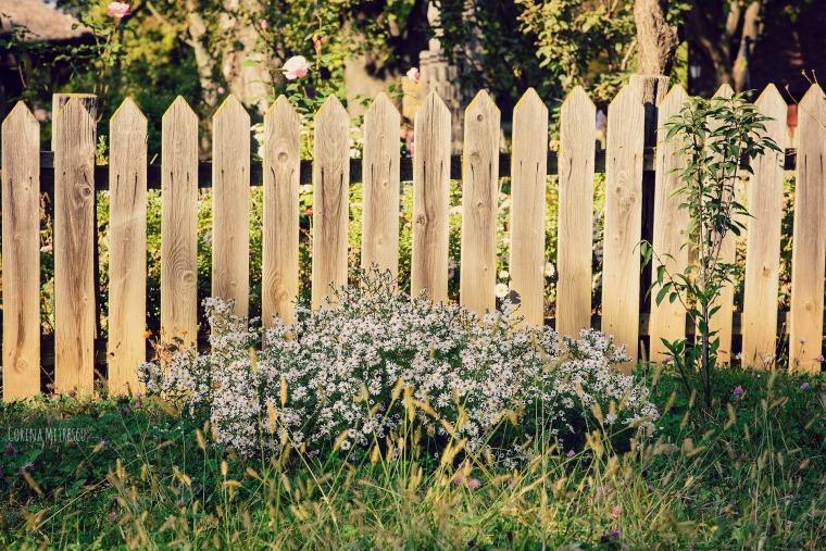 flori langa gard la mzeul satului toamna