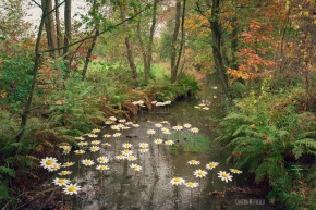 flowers art hamont achel