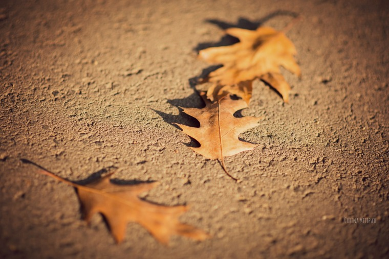 frunze de stejar