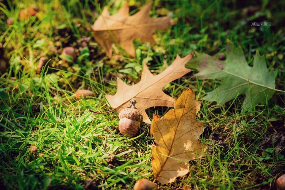 ghinde si frunze cazute pe jos