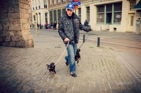 man with 2 Chihuahuas