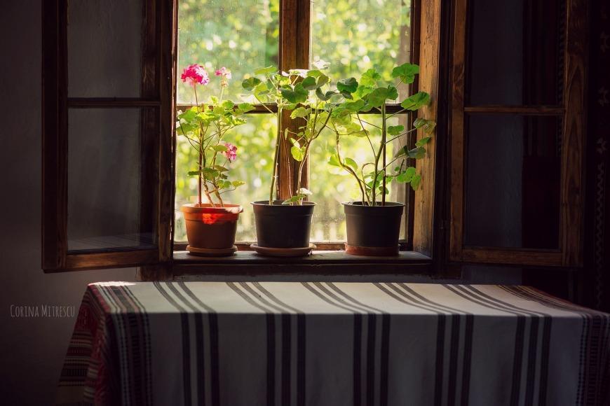 muscate in geam