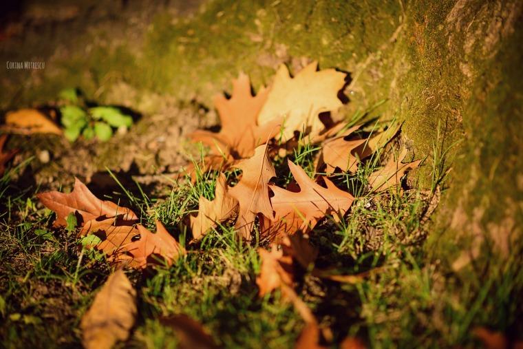 oak leaves frunze stejar