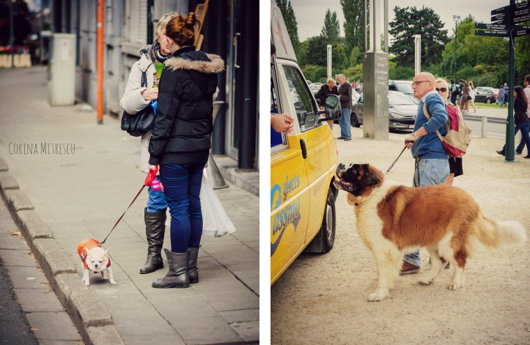 people with dogs