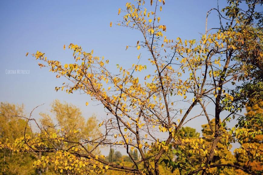 yellow trees blue sky autumn
