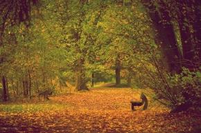 autumn, bench, forest