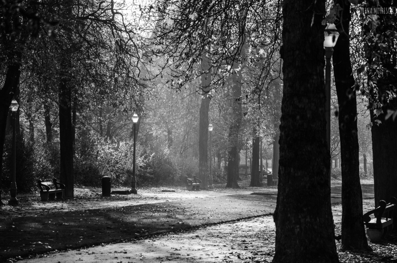 autumn parc black and white