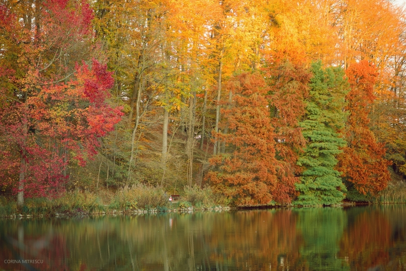 autumn trees lake