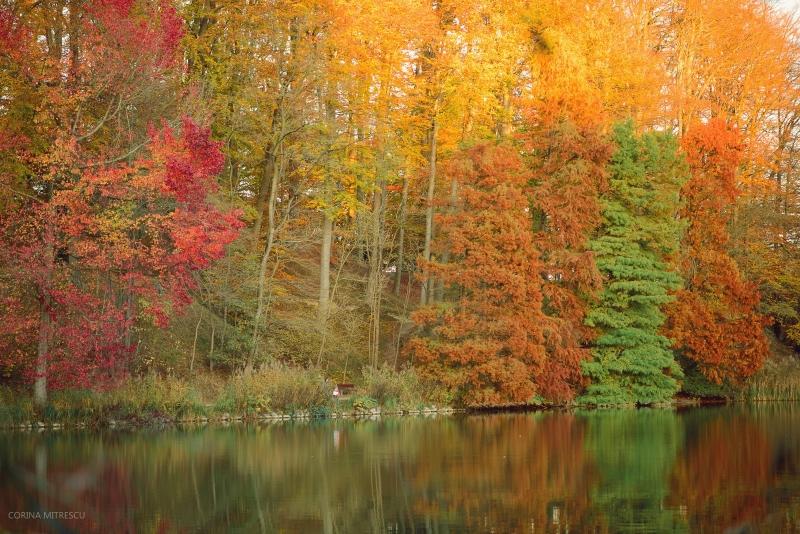 autumn trees lake