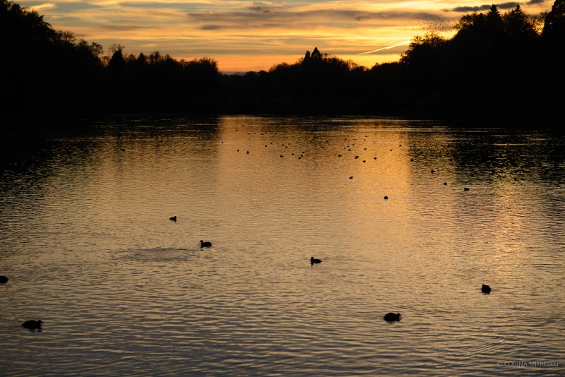 birds on lake at sunset