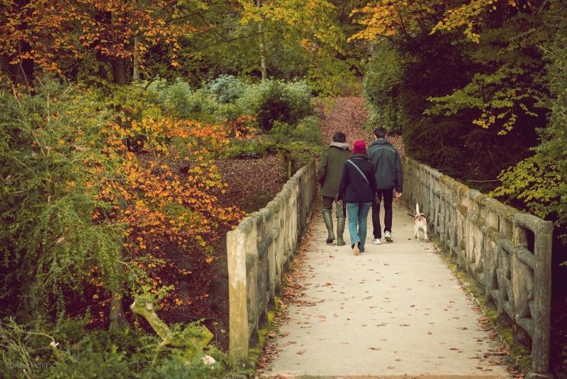 bridge, forest, autumn, walking the dog