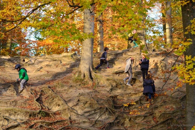 children playing, autumn forest