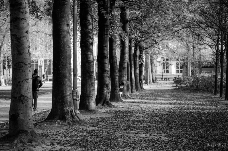 trees brussels parc