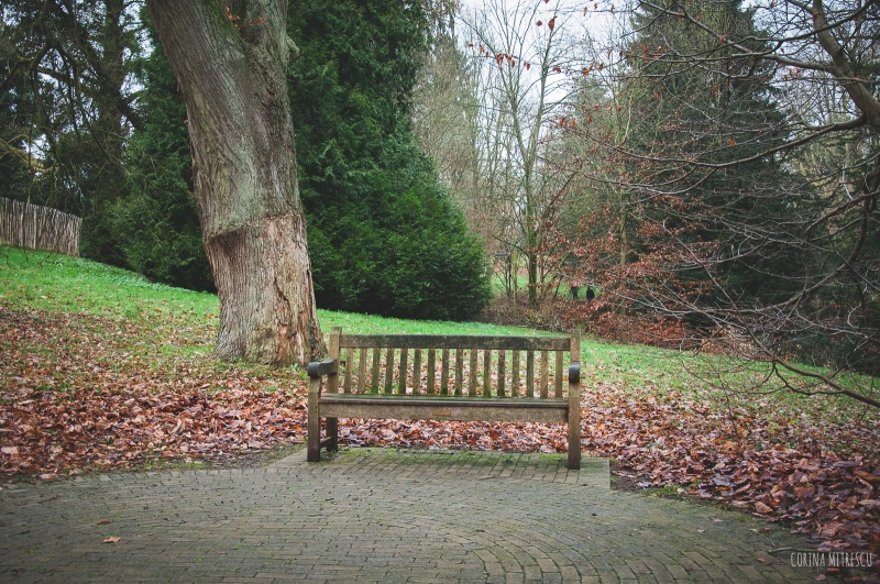 bench in park brussels tournay solvay