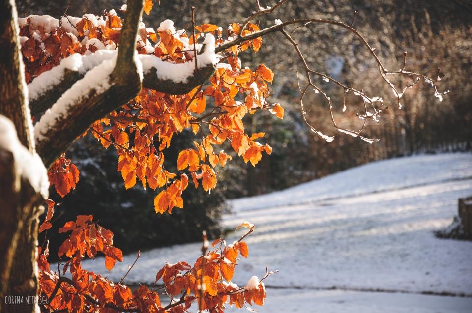 brussels snow december 2014