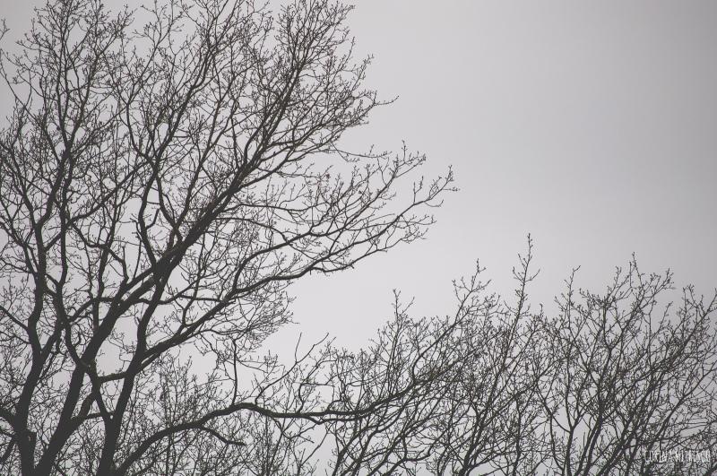 empty tree tops winter
