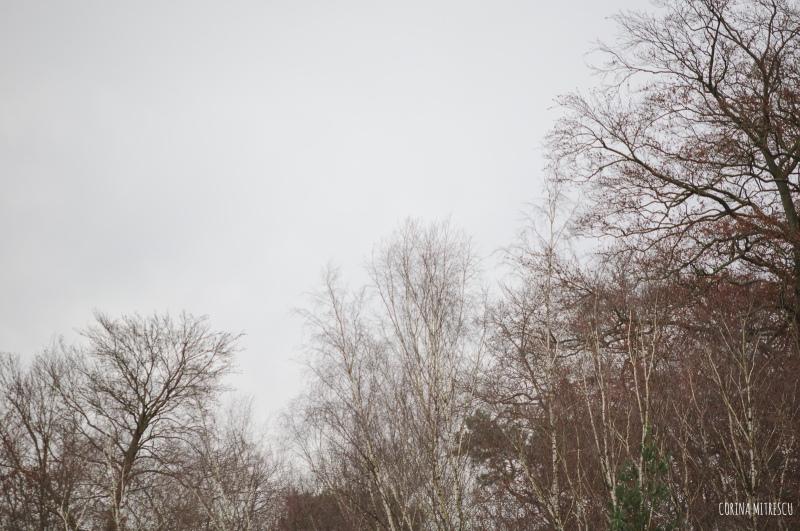 empty tree tops