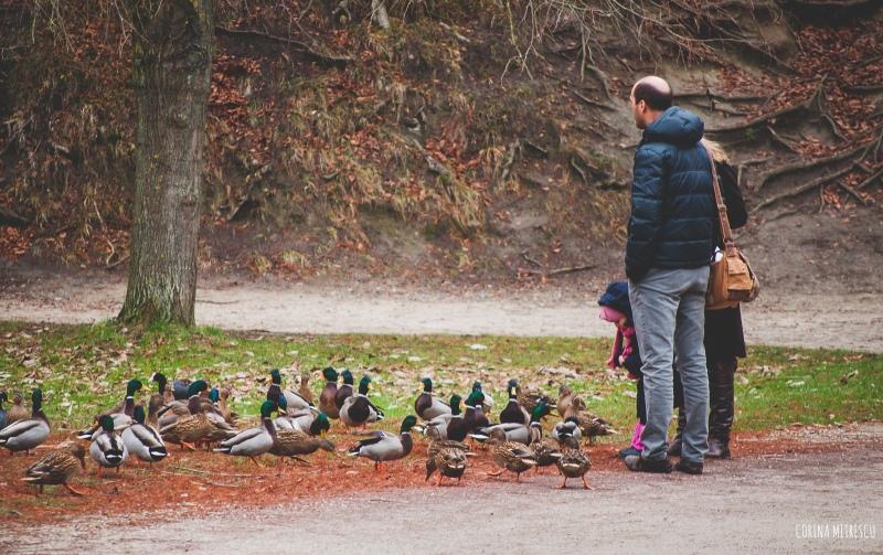 family ducks