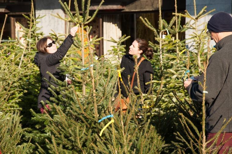 flagey tree market