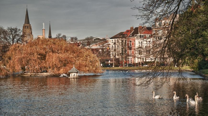 ixelles swans