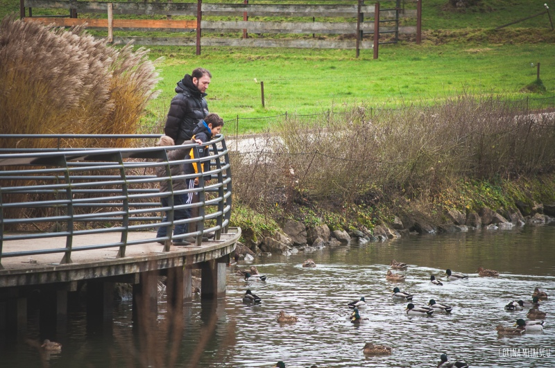 la hulpe ducks