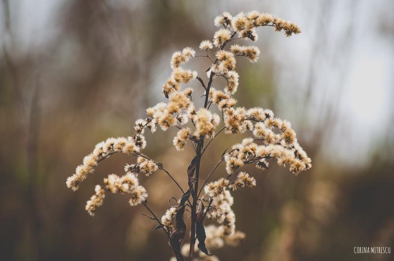 plant beige puffs