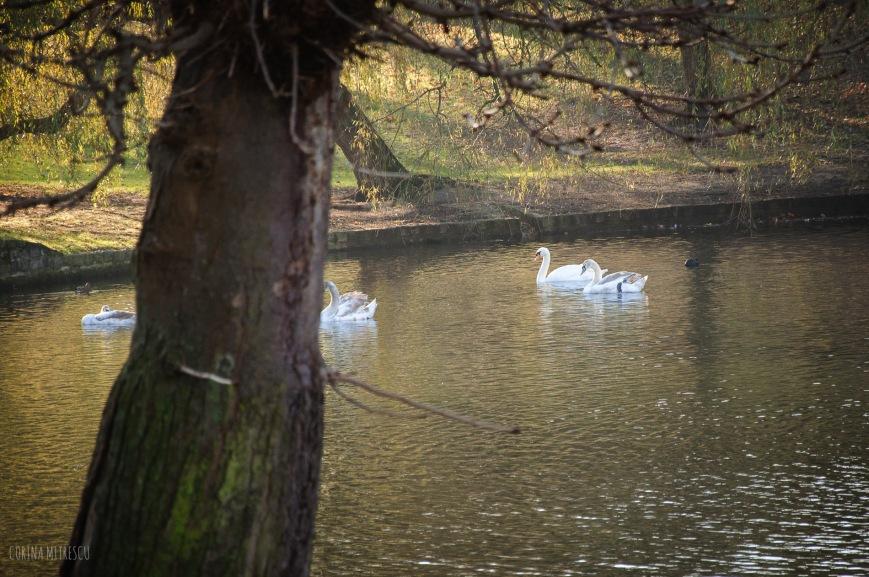swans ixelles