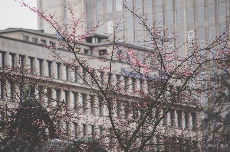 tree flowers winter