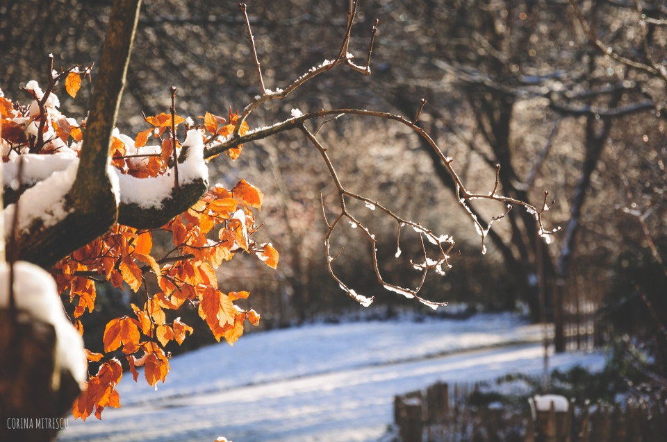 winter snow orange leaves