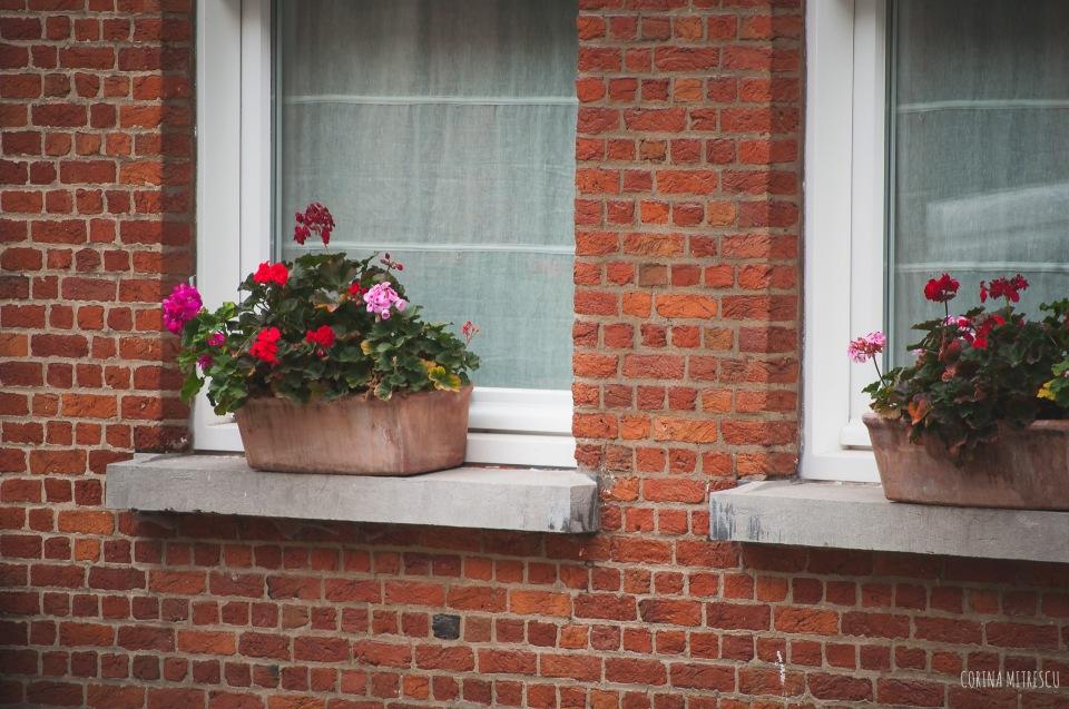 window flowers