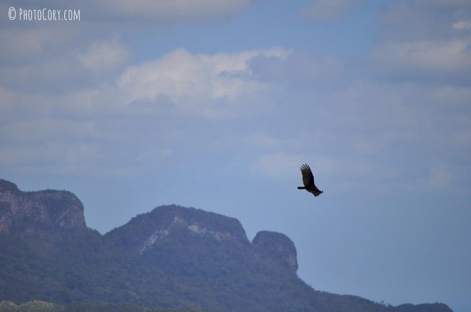 black bird cuba