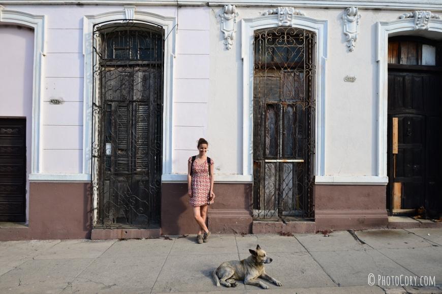 cienfuegos cuba dog and windows