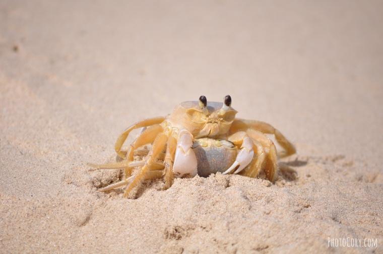 crab beach cuba
