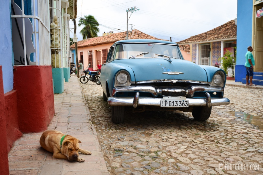 dog and old car in cuba