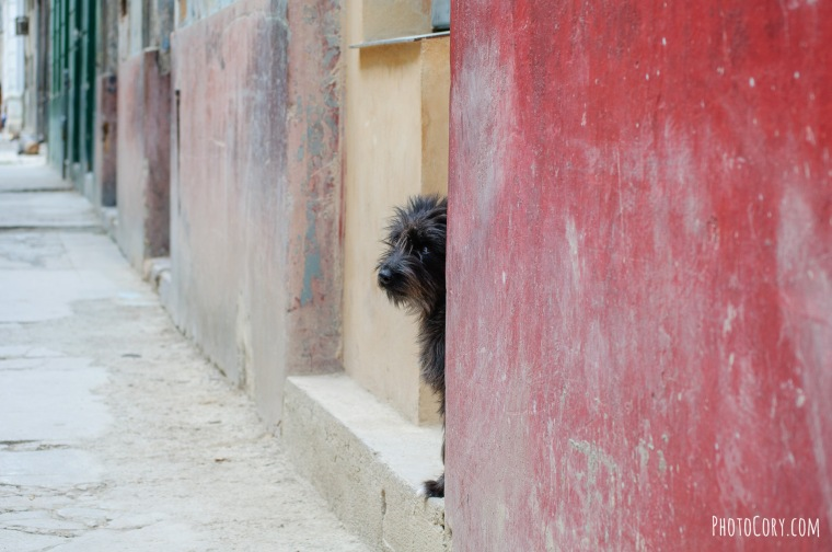 havana homeless dog