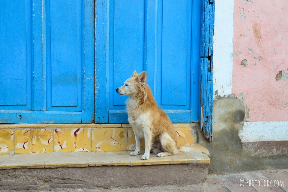 homeless dog trinidad cuba