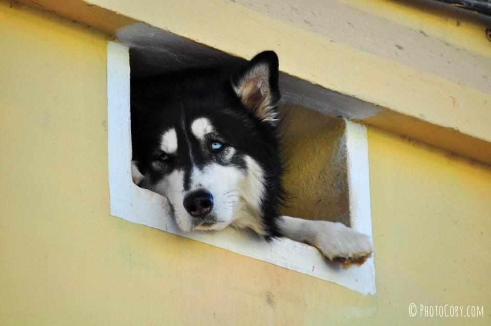 husky small window