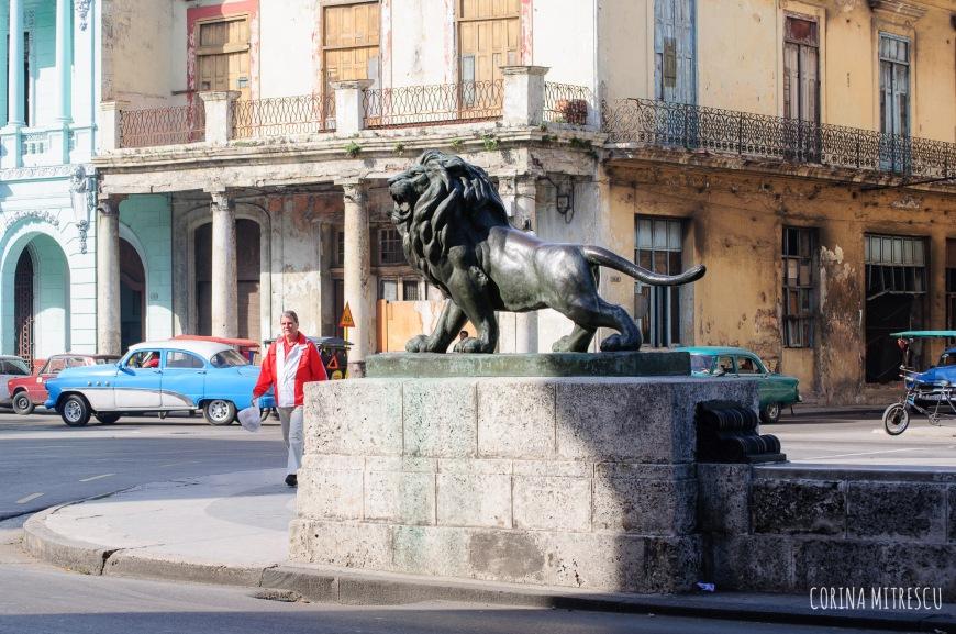 Lion on Prado