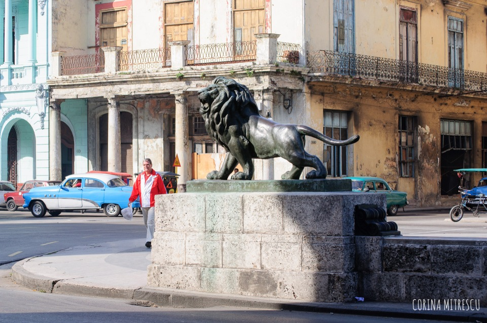 Lion on Prado
